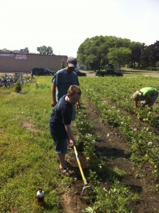 Youth farmers help the Stone's Throw farmers weed their potato field.