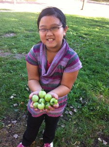 Youth Farmers harvest green tomatoes in Frogtown.