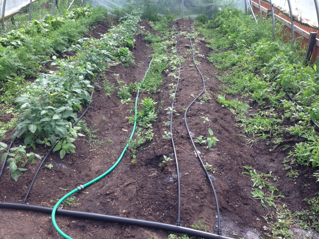Our newly installed drip irrigation system at Lyndale Elementary's Hoop House